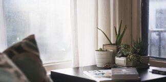 Jakie rośliny warto mieć w domu? fot. Pixabay.com