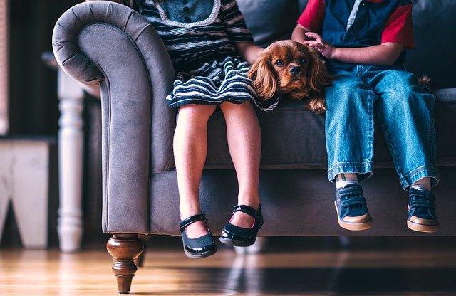 Psy uczą dzieci odpowiedzialności, fot. Pixabay.com