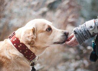 Dlaczego warto mieć psa? fot. Pixabay.com