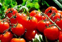 Pomidory, fot Pixabay.com